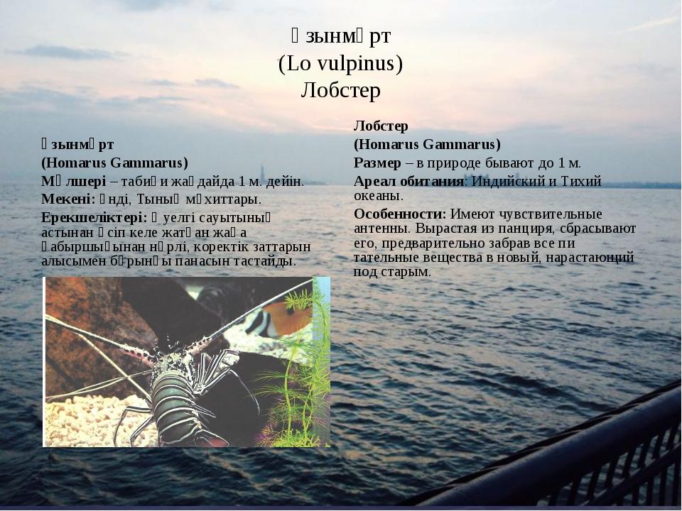 Ұзынмұрт (Lo vulpinus) Лобстер Ұзынмұрт (Homarus Gammarus) Мөлшері – табиғи ж...