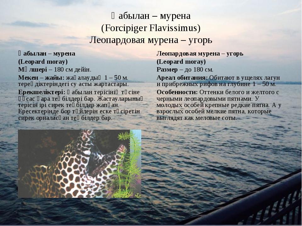 Қабылан – мурена (Forcipiger Flavissimus) Леопардовая мурена – угорь Қабылан...