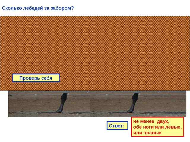 Проверь себя Сколько лебедей за забором? Ответ: не менее двух, обе ноги или л...