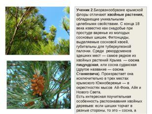 Ученик 2.Биоразнообразие крымской флоры отличают хвойные растения, обладающие