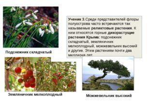 Ученик 3.Среди представителей флоры полуострова часто встречаются так называе