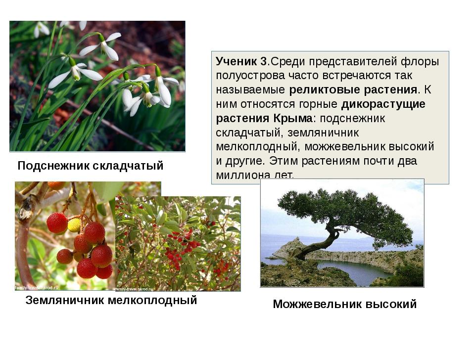 Ученик 3.Среди представителей флоры полуострова часто встречаются так называе...