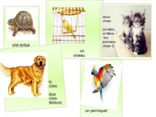 une tortue deux chats (et Mini , et Mina - les jumeaux chats !) un perroquet