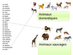 Animaux sauvages Animaux domestiques un chat un chien un cheval un cochon un