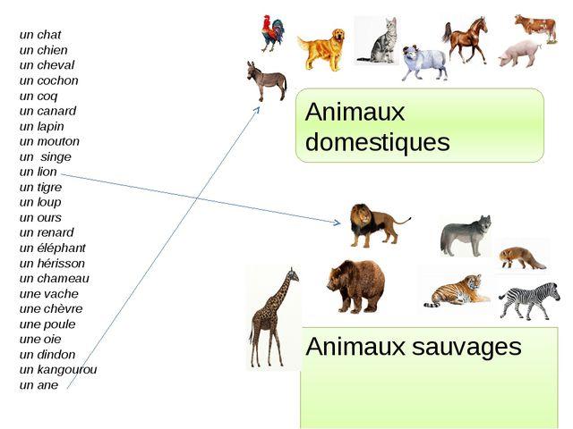 Animaux sauvages Animaux domestiques un chat un chien un cheval un cochon un...