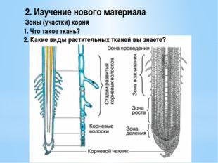 2. Изучение нового материала: Зоны (участки) корня 1. Что такое ткань? 2. Как