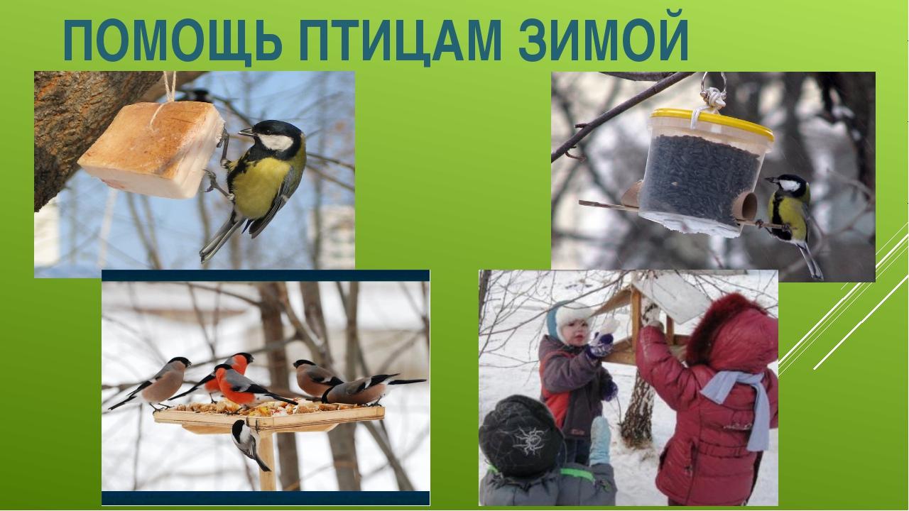 представляет картинка как помочь птицам зимой зависит того, насколько