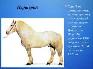 Одной из самых высоких зарегистрированных лошадей был першерон по имени Докто
