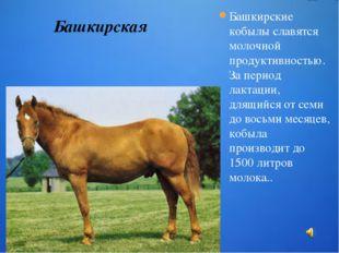Башкирские кобылы славятся молочной продуктивностью. За период лактации, длящ