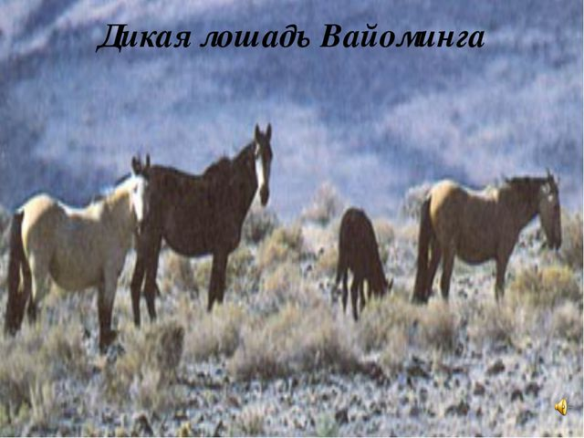 Дикая лошадь Вайоминга