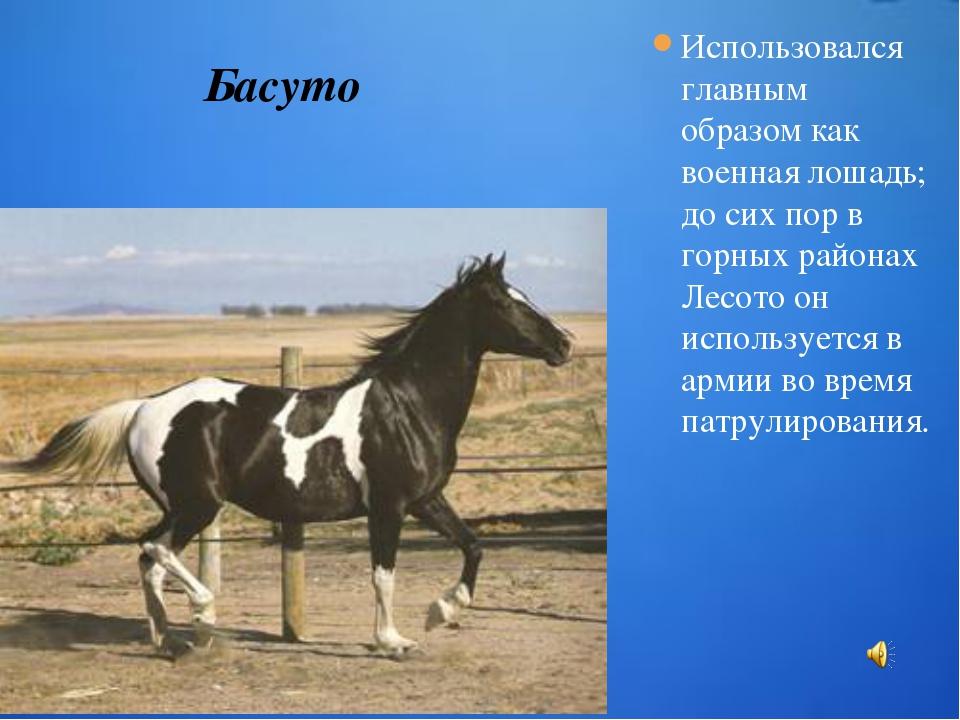 Использовался главным образом как военная лошадь; до сих пор в горных районах...