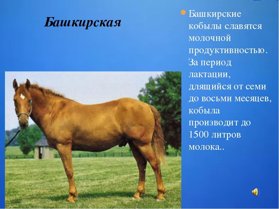 Башкирские кобылы славятся молочной продуктивностью. За период лактации, длящ...