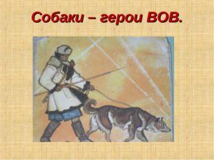 Собаки – герои ВОВ.