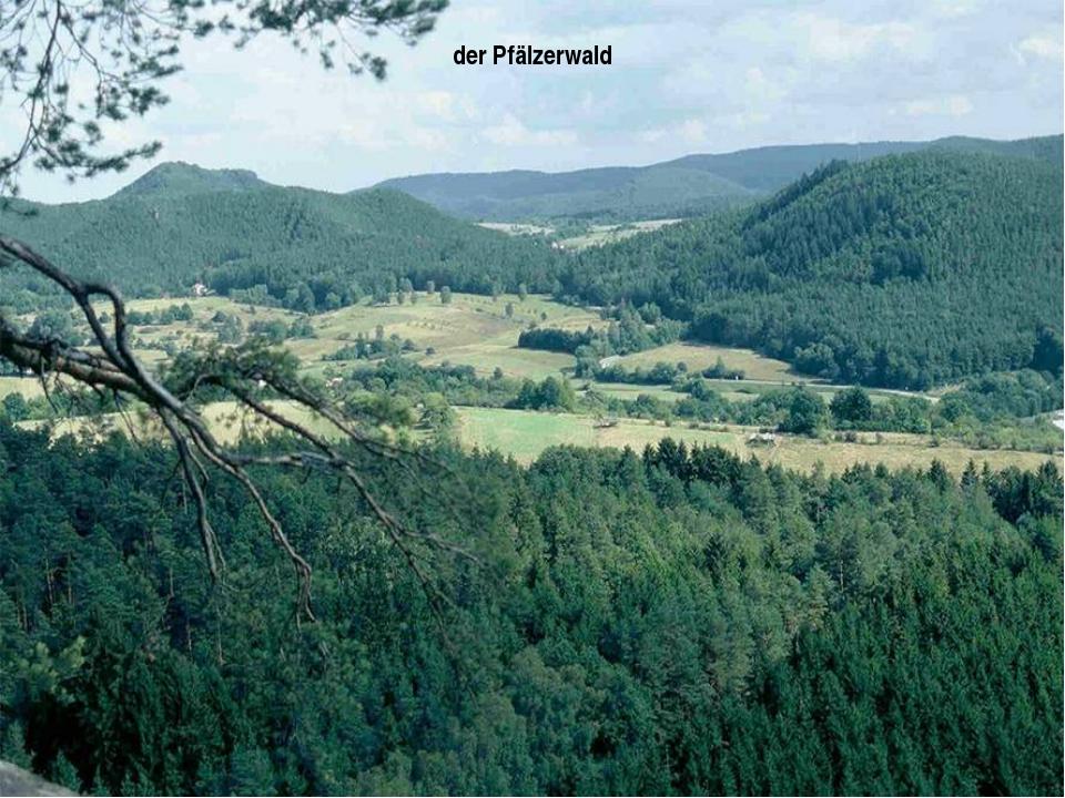 der Pfälzerwald