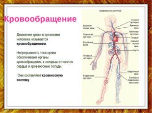Кровообращение Движение крови в организме человека называется кровообращением