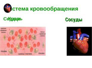 Система кровообращения Кровь Сердце Сосуды