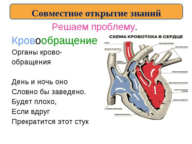 Решаем проблему. Кровообращение Органы крово- обращения День и ночь оно Словн...