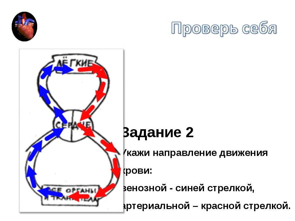 Задание 2 Укажи направление движения крови: венозной - синей стрелкой, артери...