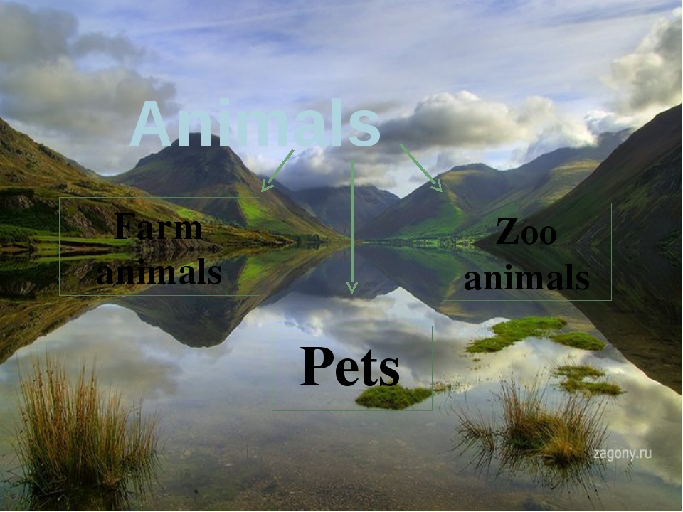 Animals Pets Farm animals Zoo animals