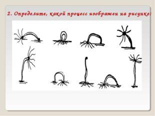 2. Определите, какой процесс изображен на рисунке: