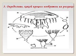 3. Определите, какой процесс изображен на рисунке: