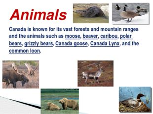 Canada is known for its vast forests and mountain ranges and the animals such