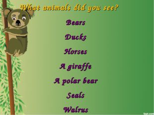 What animals did you see? Bears Ducks Horses A giraffe A polar bear Seals Wal