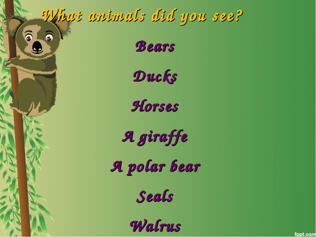 What animals did you see? Bears Ducks Horses A giraffe A polar bear Seals Wal...