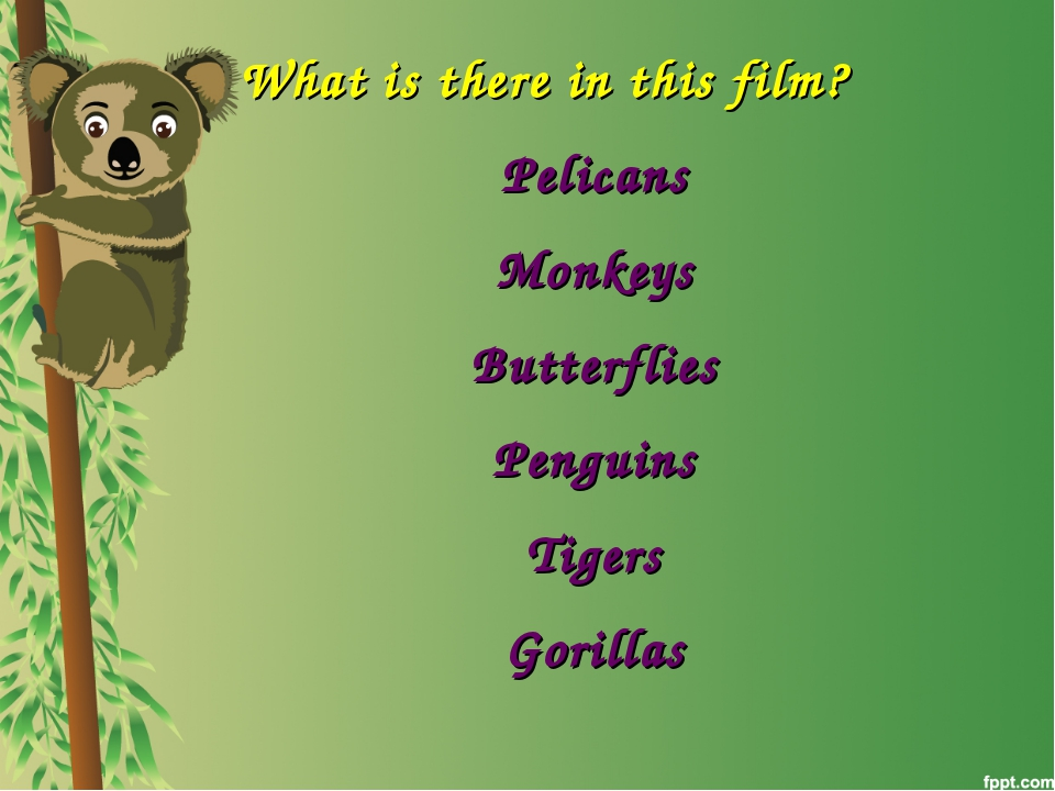 What is there in this film? Pelicans Monkeys Butterflies Penguins Tigers Gori...
