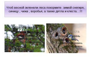 Чтоб весной зеленели леса покормите зимой снегиря, синицу , чижа , воробья, а