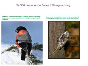 За 500 лет исчезло более 150 видов птиц! Снегирь - любит полакомиться плодами
