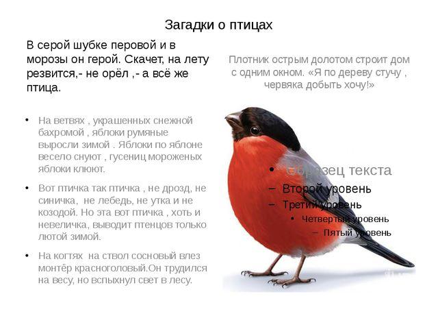 Загадки о птицах В серой шубке перовой и в морозы он герой. Скачет, на лету р...
