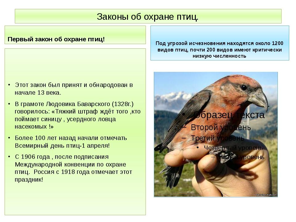 Законы об охране птиц. Первый закон об охране птиц! Этот закон был принят и о...