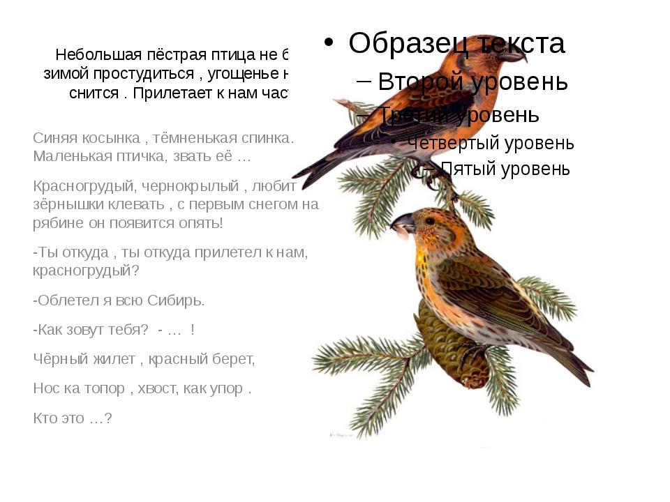 Небольшая пёстрая птица не боится зимой простудиться , угощенье наше ей снитс...