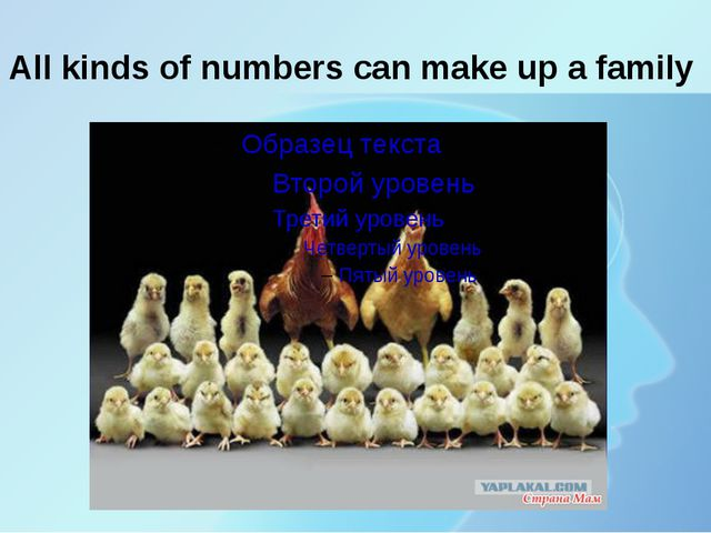 All kinds of numbers can make up a family