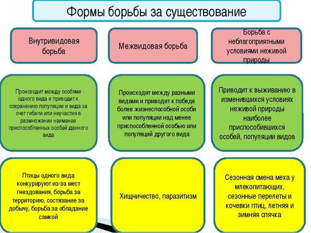 Формы борьбы за существование Внутривидовая борьба Межвидовая борьба Борьба...