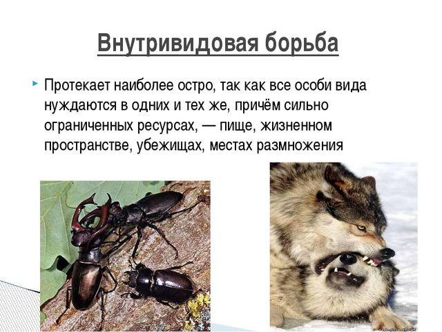 Протекает наиболее остро, так как все особи вида нуждаются в одних и тех же,...