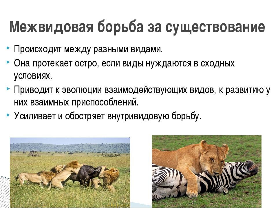 Происходит между разными видами. Она протекает остро, если виды нуждаются в с...