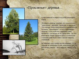 «Проклятые» деревья… Существовали и запреты на рубку некоторых пород. В перву