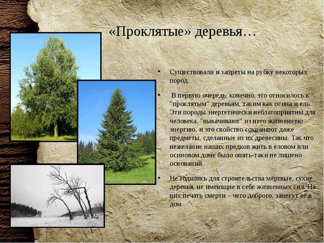 «Проклятые» деревья… Существовали и запреты на рубку некоторых пород. В перву...