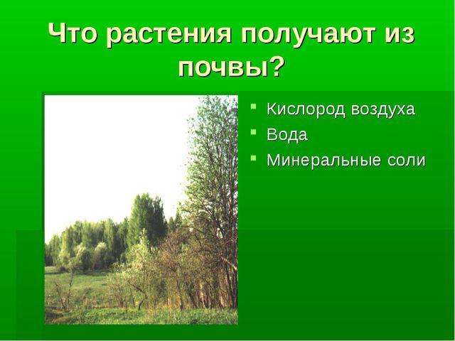 Что растения получают из почвы? Кислород воздуха Вода Минеральные соли