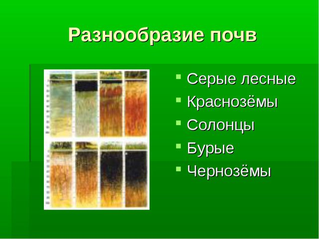 Разнообразие почв Серые лесные Краснозёмы Солонцы Бурые Чернозёмы