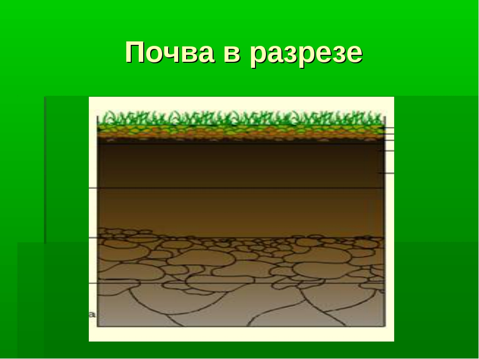 Почва в разрезе