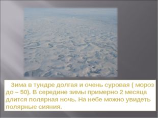 Зима в тундре долгая и очень суровая ( мороз до – 50). В середине зимы приме