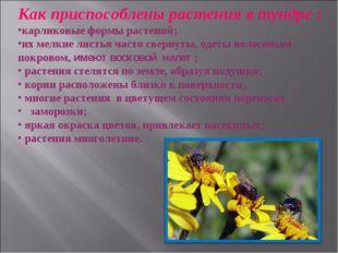Как приспособлены растения в тундре : карликовые формы растений; их мелкие ли