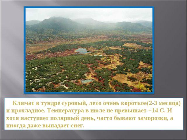 Климат в тундре суровый, лето очень короткое(2-3 месяца) и прохладное. Темпе...