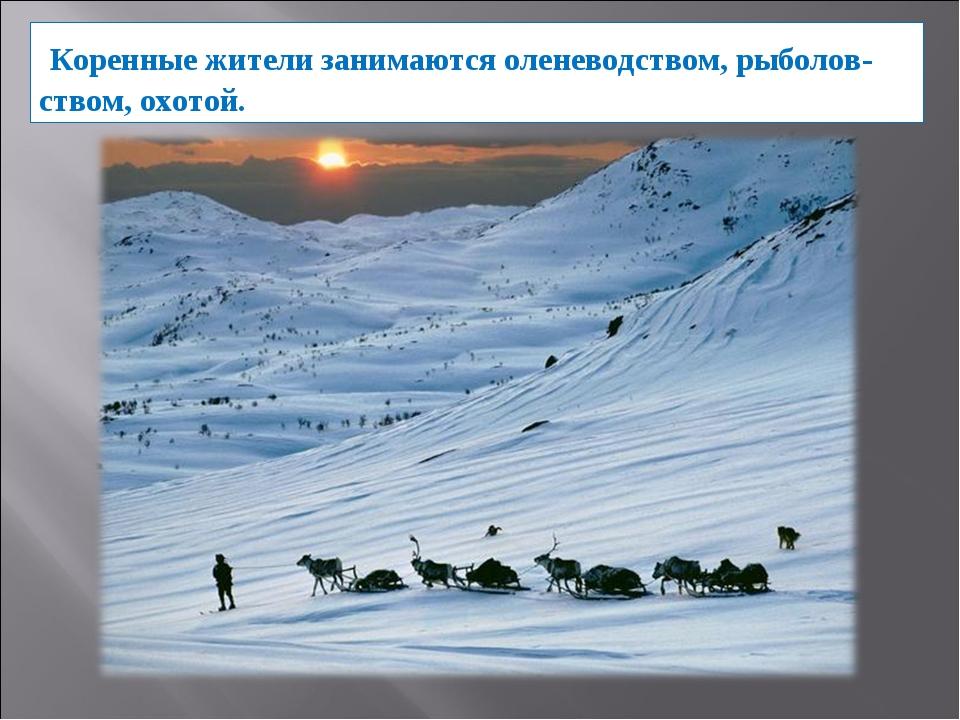 Коренные жители занимаются оленеводством, рыболов-ством, охотой.