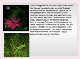 Цветку папоротника, столь необычному, естественно приписывали чудодейственные