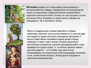 Яблоневое дерево и его плоды широко использовались в восточнославянских обряд