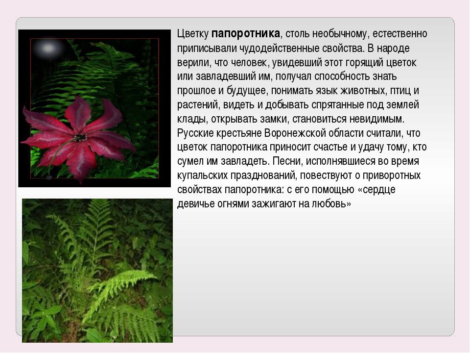 Цветку папоротника, столь необычному, естественно приписывали чудодейственные...